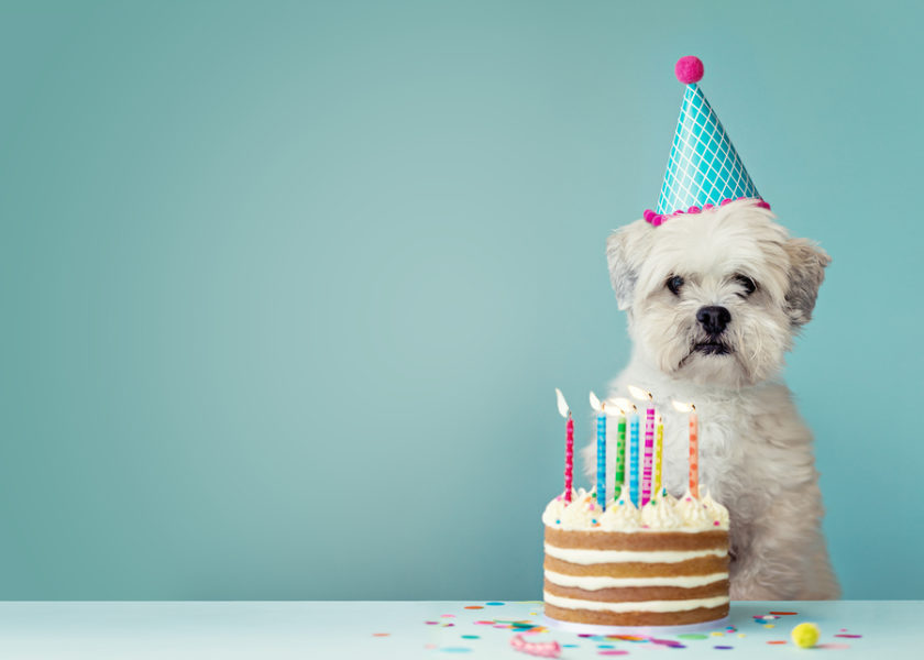bigstock-Cute-dog-with-party-hat-and-bi-205814497.jpg